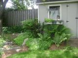 My Garden June 2008