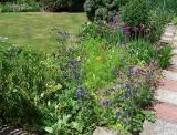 Herbaceous Border By Kitchen