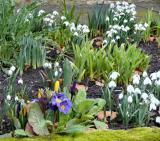 My Garden In February