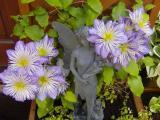 Photos From My Garden